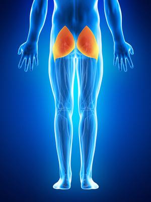 スクワット 鍛えられる筋肉