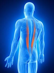 脊柱起立筋 鍛え方