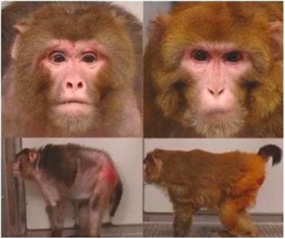 猿の老け具合 比較 食事制限