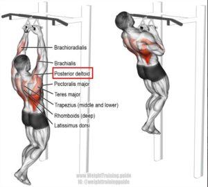 自重トレーニング 肩